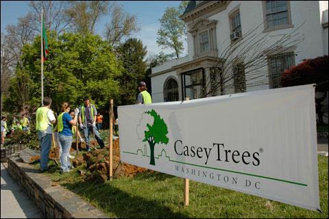 Case Study - Casey Trees | ddoe