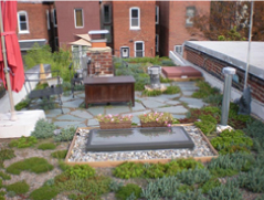 green-roof-pic.jpg