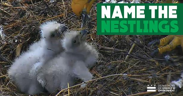 Name the Nestlings poll