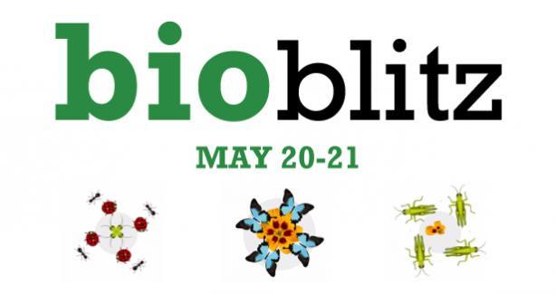 BioBlitz and Biodiversity Festival