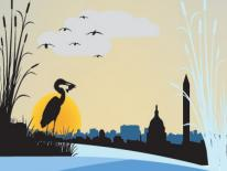 Illustration of Heron looking over the Potomac to DC skyline