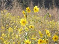 Photo of wildflowers in field